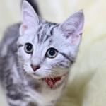 ペット臭対策!ペットと快適に暮らすマンション